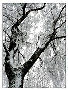 winter-385640__180