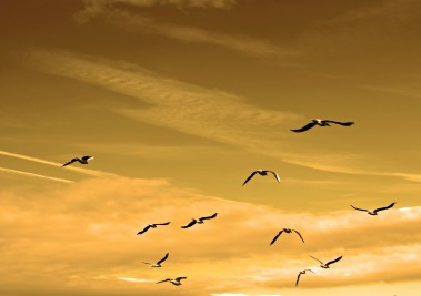 image-birds-air-84665_1920